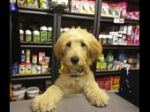Pet & Accessory -- Bentleigh -- #4332496 For Sale